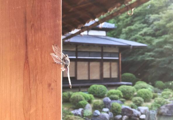 2018/07京都智積院画像